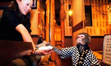 Monos camareros